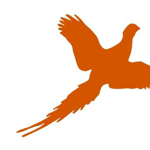 orange pheasant