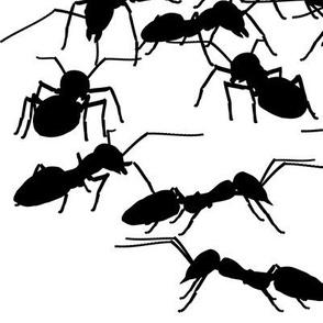 Black Picnic Ants