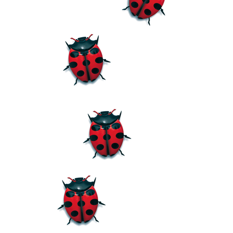 Crawling Ladybugs fabric by animotaxis on Spoonflower - custom fabric