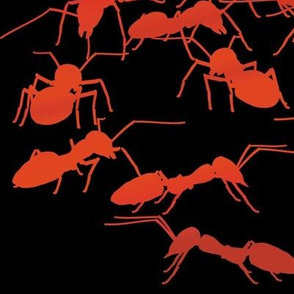 Red Fire Ants 2