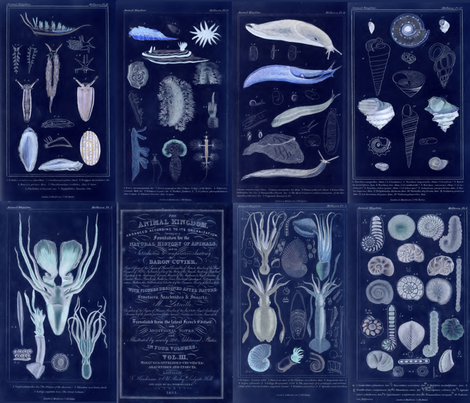 Couvier Biology Plates Inverted fabric by craftyscientists on Spoonflower - custom fabric