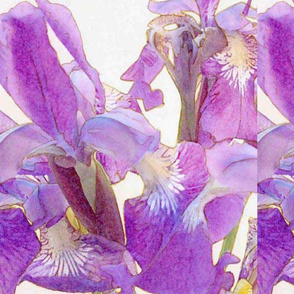 Iris Dreamers