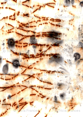 Rjuniper_snow_tiger_scan_preview