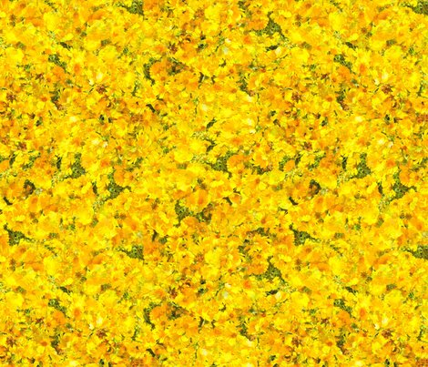 Sunshine_coreopsis_download_9513_layered_divided_shop_preview