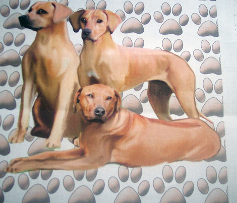 three_rhodesian_ridgebacks