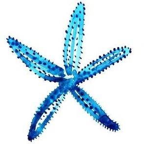 cestlaviv_starfish1teal
