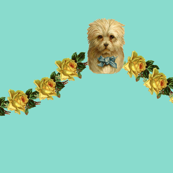 Hello Puppy on Soft Teal