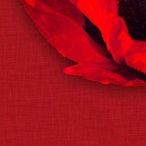 Red_Linen_Poppy