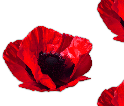 Red_Poppy fabric by michelle_zollinger_tams on Spoonflower - custom fabric