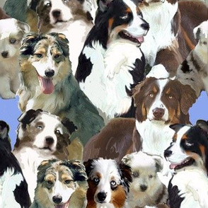 australian shepherd collage