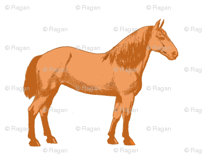 Orange Daisy Horse