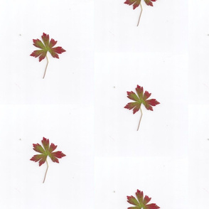 medium red leaf