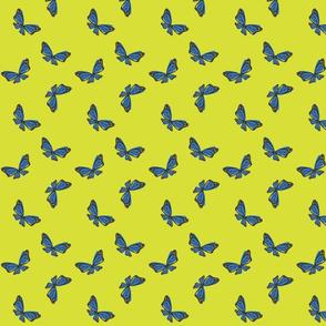 monarch-full-butterfly-blue