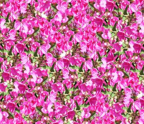 Geraniums_pink_shop_preview
