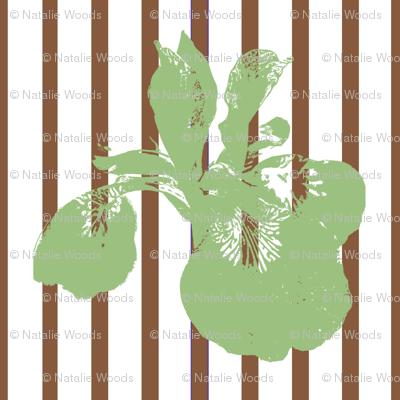 iris_contrast_brown_stripe