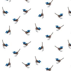 Blue Wren Ditsy