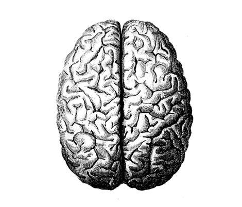 Rbig_brain_shop_preview