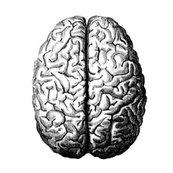 Rbig_brain_shop_thumb