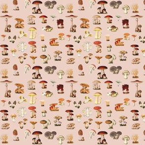 Antique Mushrooms in Warm Pink Beige