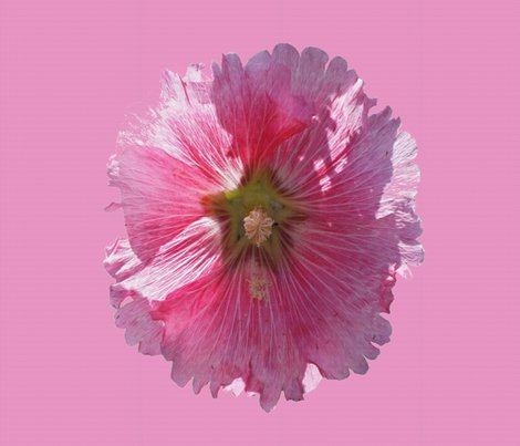 Rrhollyhock_on_pink_42_mended_use_100_dpi_shop_preview