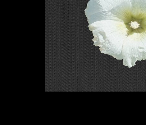 Rwhite_hollyhock_half_on_black_shop_preview