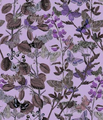Twilight In The Butterflies' Garden