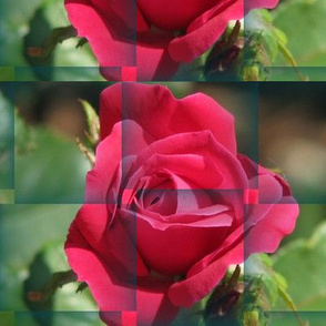 Photograph 3435 rose weave