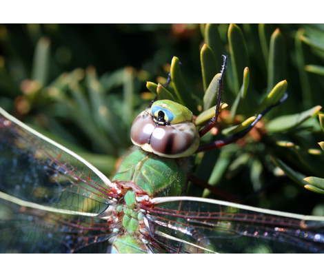 Dragonfly fabric by feebeedee on Spoonflower - custom fabric