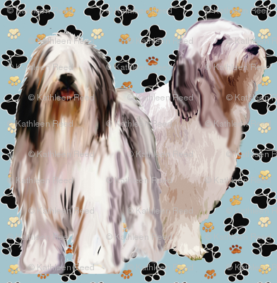 bearded_collies_and_paw_prints