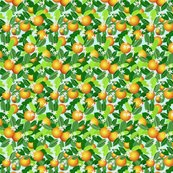 Citrus_fruit_fixed_ed_shop_thumb