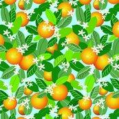 Citrus_fruit_new_adj_shop_thumb
