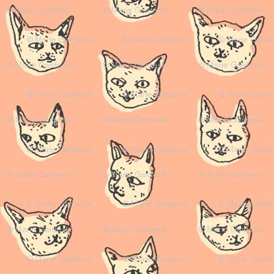 Gritty Kitties   Salmon