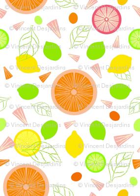 Citrus Slices Illustrator Version