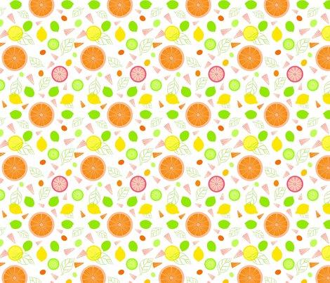 Citrus_slices_illustrator_white_adj2_ed_shop_preview