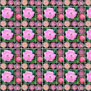PicMonkey_Collage9