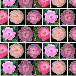 PicMonkeypink_roses
