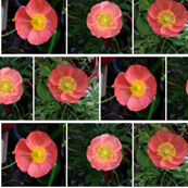 PicMonkey_CollagePoppy3