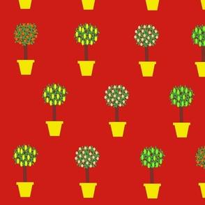 Citrus_Cheerful_Flowerpots