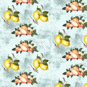 Citrus vintage now