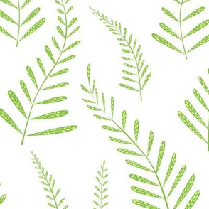 Ferns - green white