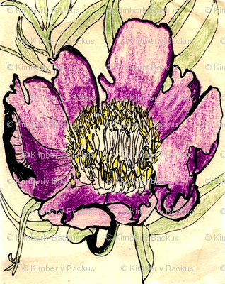 early_peony_drawing_large_brighter