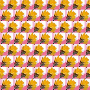 yellow_buds