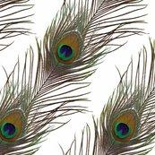 White_peacock_stripe_shop_thumb