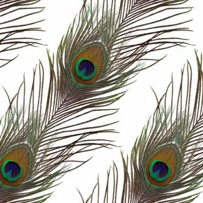 Peacock Stripe on White