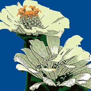 zinnias, cream-ed