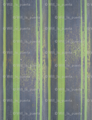 Bamboo: Purple Stripes