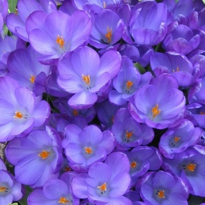 Purple_Flowers_Pillow