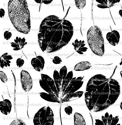 Three mistery leaves