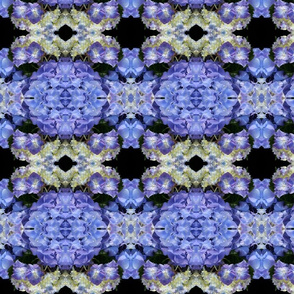 Blue Hydrangeas 5710