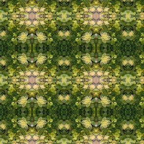 Green Succulents 5773